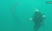 Divers Swim With Rare Bioluminescent Worm (Video)