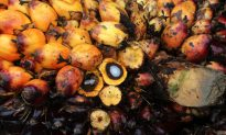 Palm Oil Certification Body Purges Membership