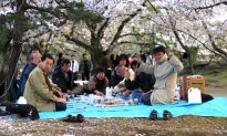 Japanese Contemplate Solutions To Protect Cherry Blossoms from Chinese Tourists