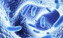 Immune System Controls Social Behavior, Study Finds