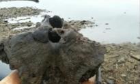 Fisherman Thinks he Hooked Woolly Mammoth Skull (Video)