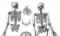 5 Herbs for Bone Health