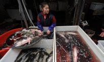 China's Antibiotic Problem Comes Under the Spotlight