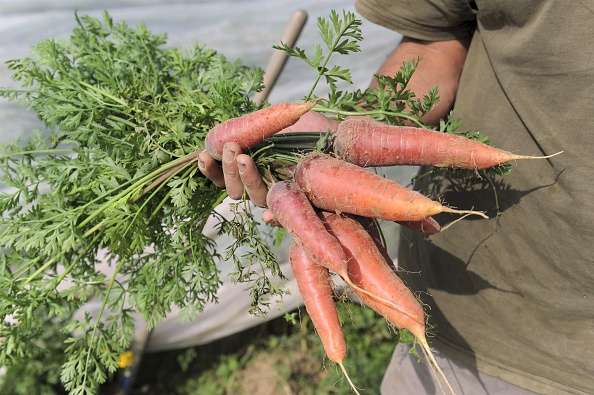 How to Grow Carrots: Soil Prep, Planting & Harvesting
