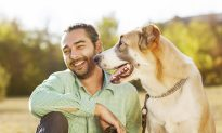 Signs Your Dog May Have the Flu