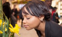 What's That Smell? A Controversial Theory of Olfaction Deemed Implausible