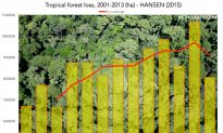 Tropical Forests 'Worsening', Could Become 'Critical'