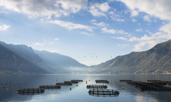 Could Aquaculture Save the Oceans and Feed the World?