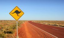 Roger the Kangaroo, Famed for Muscular Frame, Dies in Australia at Age of 12