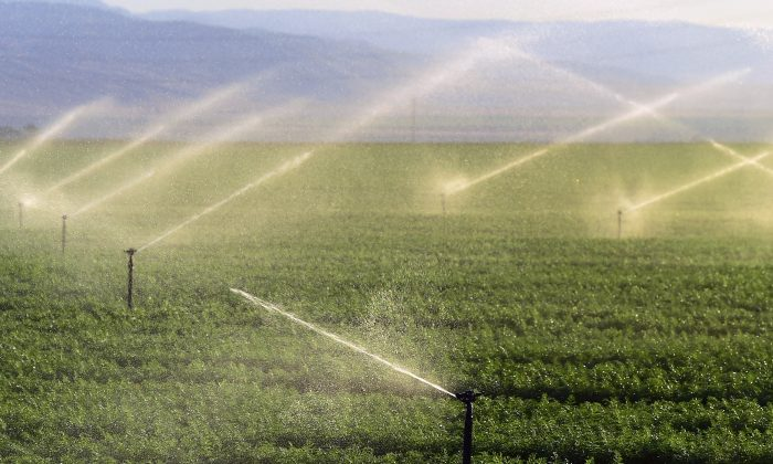 Fields of carrots are watered near where the California Aqueduct flows through Kern County, the nation's number 2 crop county, some twenty five miles south of Bakersfield, California on March 29, 2015 (FREDERIC J. BROWN/AFP/Getty Images)