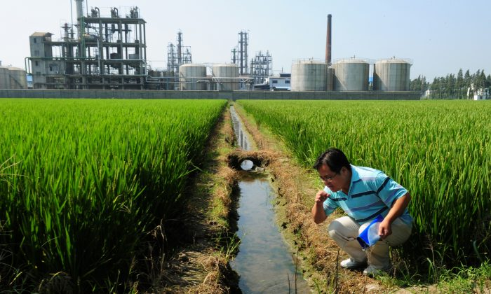 Chinese environmental activist Wu Lihong checks the water quality in an irrigation channel outside a chemical factory beside a rice paddy and on the edge of Taihu Lake in Yixing in Jiangsu Province on September 14, 2011. (MARK RALSTON/AFP/Getty Images)