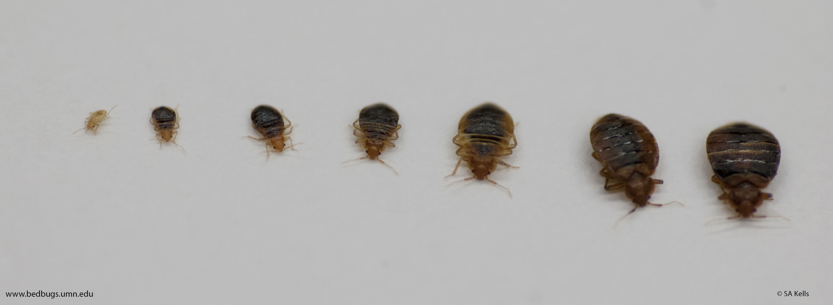 bed bugs are repelled by certain colors attracted by others bed