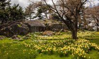A Real Life Narnia's Closet: New York Botanical Garden