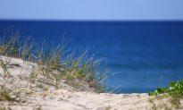 Life on the Dunes Needs Wind-Blown Sand