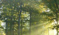 Catskills Forester: Clear-Cut Beats High-Grade