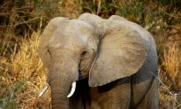 Wildlife Trade Network New Target for Weapons Trafficking