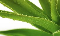 Aloe Vera: Treatments and Safety Concerns