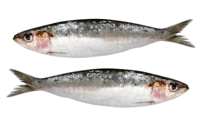 Small fish, like sardines, are high in Omega 3s, but much less likely to contain toxins. (varela/iStock)