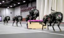 Watch This Remarkably Real-Looking Robot Cheetah Jump Hurdles (Video)