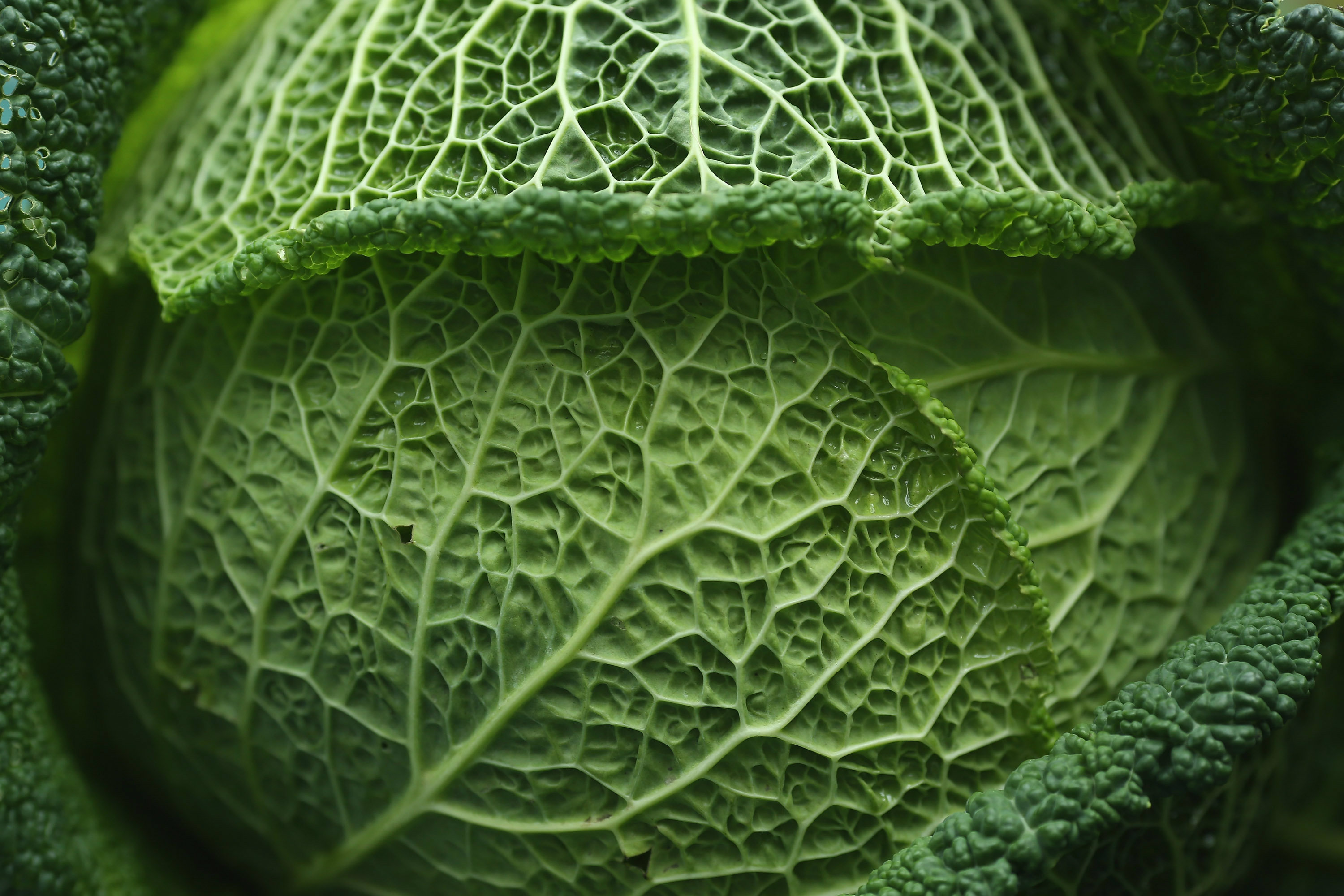 3 Reasons to Eat Your Cabbage