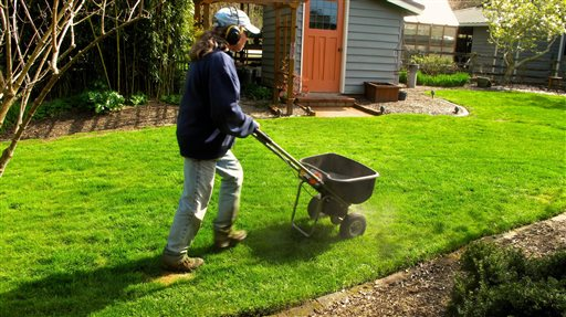 One of the most common mistakes in lawn care is over-fertilizing which can burn the plant roots and contaminate area water supplies. A good time to fertilize is just ahead of a soaking rain. (Dean Fosdick via AP)