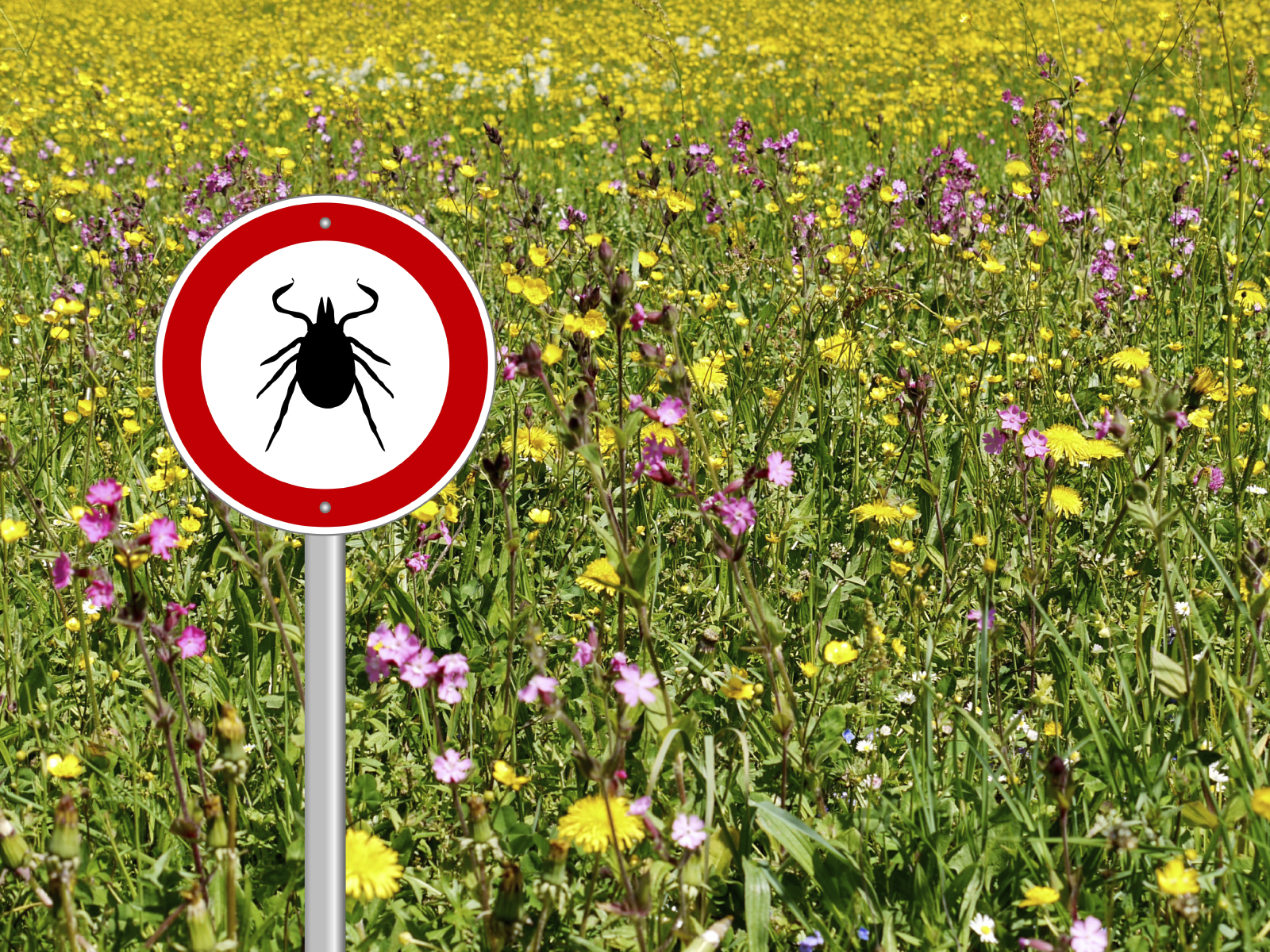 Lyme Disease: A Hard Road to Diagnosis and Recovery