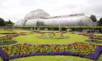 The Majestic Life of Plants at Kew Gardens