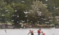 Science Supports Great Lakes Separation to Stop Asian Carp