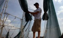 First Season Since Spill, Gulf Shrimpers Concerned