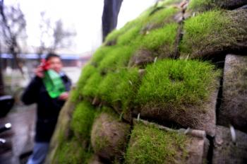 Dai Haifei, 24, from China's Hunan province, waters the patches of grass on his egg-shaped mobile house where he has been living for the last two months, located near his office in Beijing on December 1, 2010. (Getty Images)