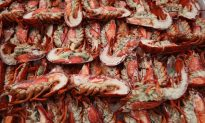 Maine's Lobster Price Lowest in Two Decades