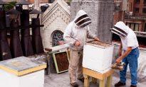 Warm Winter Disturbs NY's Bees