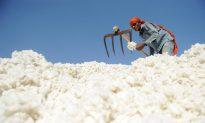 India Rescinds Cotton Export Ban