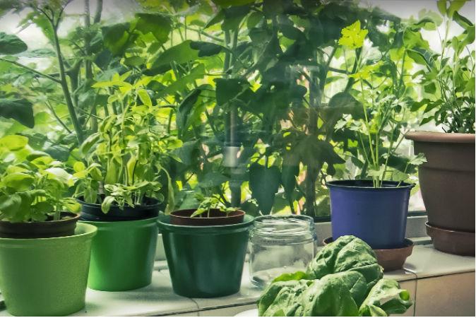 Basil: Herb of Scorpions, Doctors, and Kings