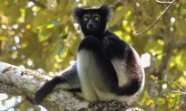 Rare Conservation Victory in Madagascar