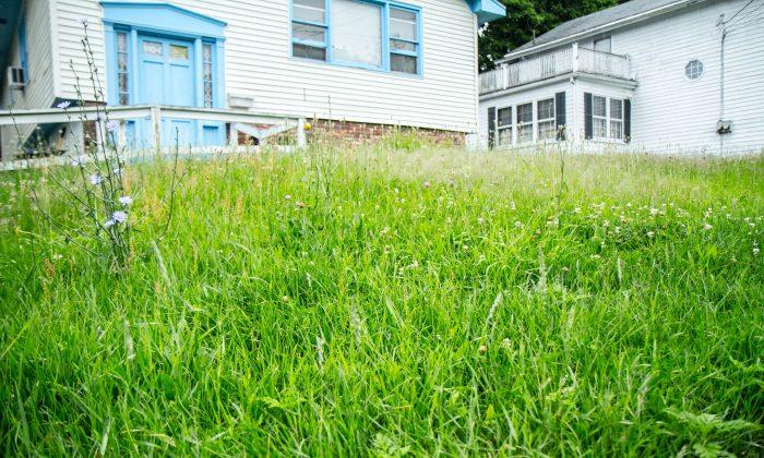 A yard in Middletown, N.Y. on June 27, 2015. (Holly Kellum/Epoch Times)