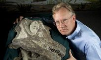 Abydosaurus Discovered Head-First
