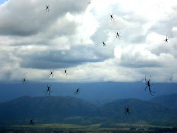Strange Storms—Frogs, Spiders and Fish