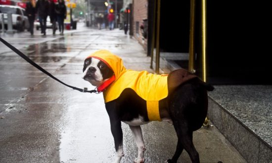 Dog Gearing Up for Sandy