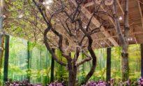 'Juno Rocks' Garden' Showcases at Canada Blooms (Photo)
