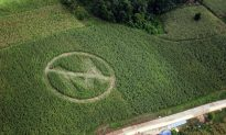 Soybean Farmer Squares Off With Monsanto Over Patent Law