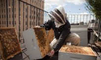 Plenty of Learning Options for New Wave of Urban Beekeepers