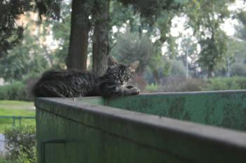 Israel Journal: National Stray Cat Problem