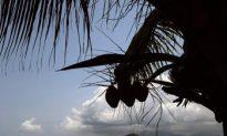 Coconut Oil Treats Acne