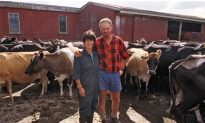 Dairy Farming: An Irreplaceable Industry