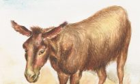 The Antidote: A Reading of 'The Donkey' by G. K. Chesterton