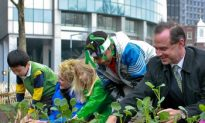From Roots to Lettuce Leaves, a History of Urban Gardening in NYC