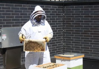 Beekeeper Fred Davis holds a frame from one of the hives that were recently installed on the roof of the Canadian Opera Company's home at Toronto's Four Seasons Centre for the Performing Arts. (Canadian Opera Company)