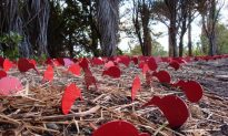 Sculpture Trail Puts Te Atatu on the Map