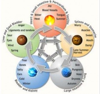 The Five Elements and the Human Body
